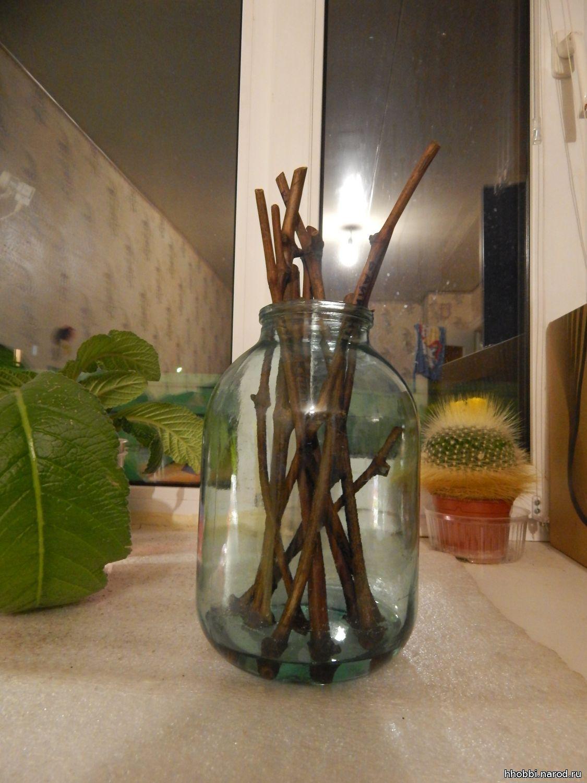 Черенки жимолости - размножение Сайт о саде, даче и комнатных растениях 93